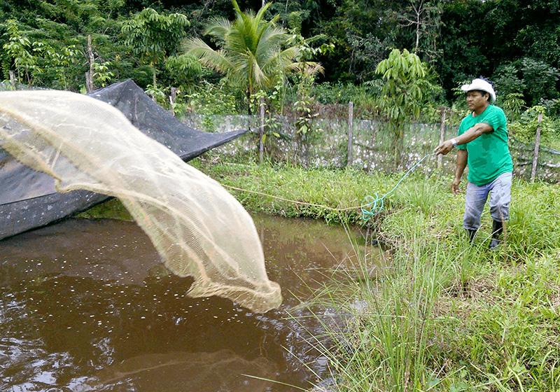 La piscicultura una opci n de diversificaci n productiva for Estanques para piscicultura